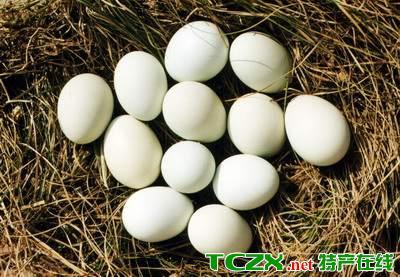 蓟县柴鸡蛋