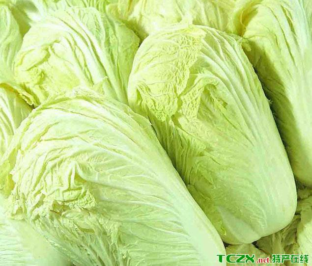 天津大白菜
