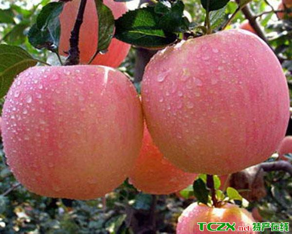 侯马红富士苹果