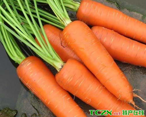 铁岭胡萝卜
