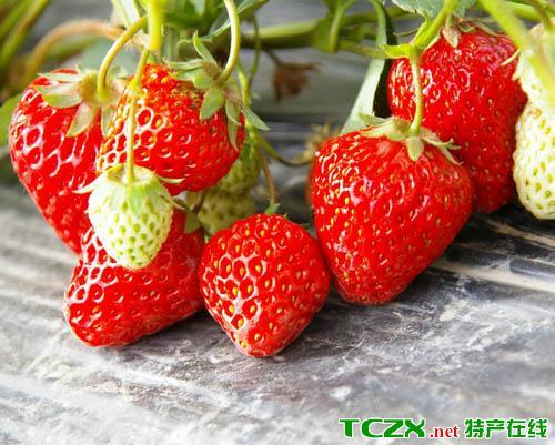 白鹤镇草莓