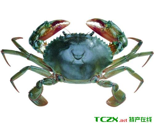 泓膏生态大闸蟹