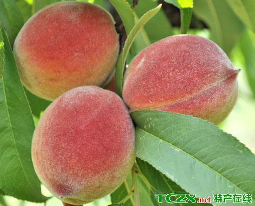 杨官水蜜桃