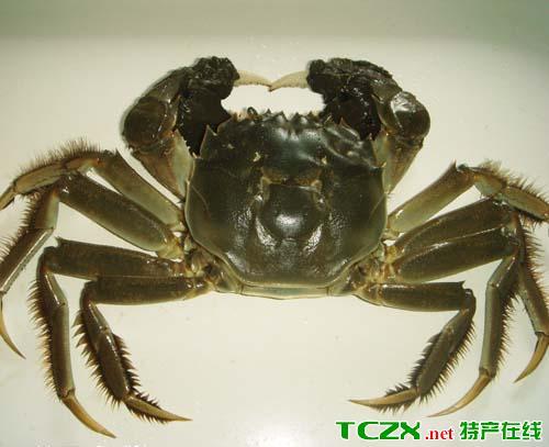 茨淮新河大闸蟹