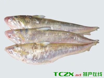 肥东毛刀鱼