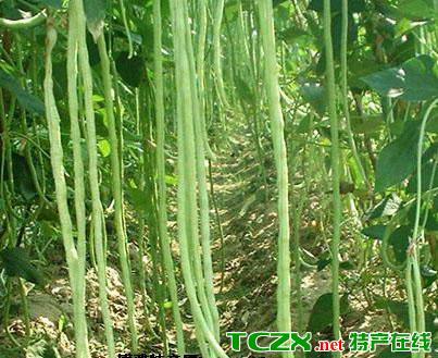 浉河干豇豆