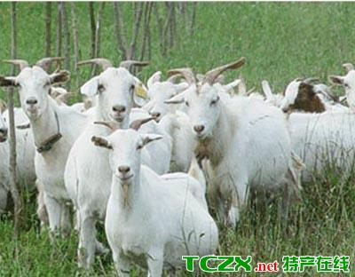 宜昌山羊板皮