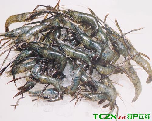 丹江口青虾