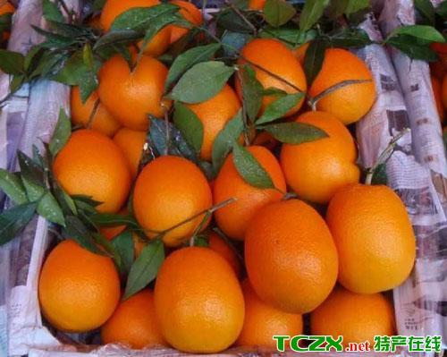 鹤城冰糖甜橙