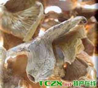 桂东桃花菌