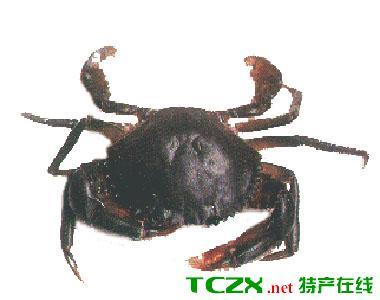 雅韶尖山蟹