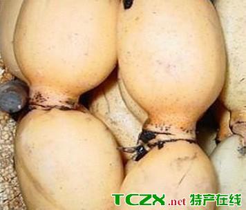 白藤断情莲藕