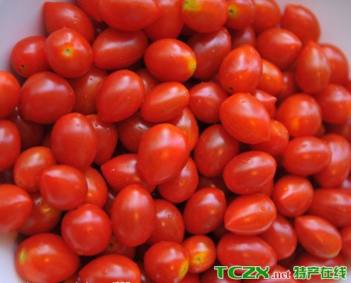 圣女小番茄