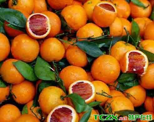 合川东山坪血橙