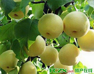 岷县浆水梨
