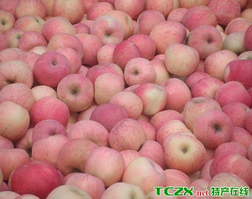 两当县苹果