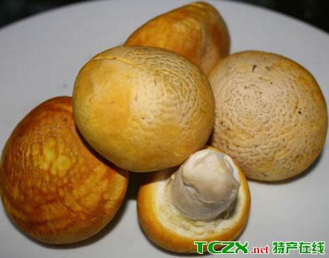 刚察黄蘑菇