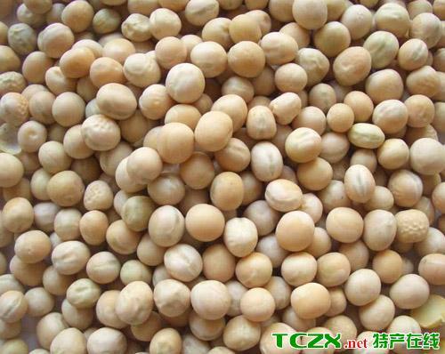 海原白豌豆