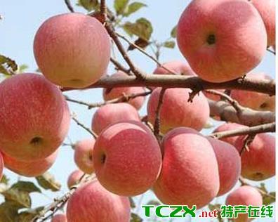 喀拉布拉苹果