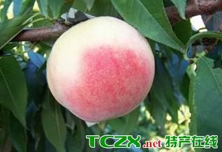 上海水蜜桃
