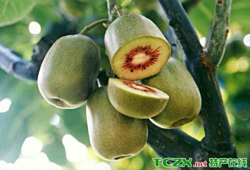 陇南猕猴桃