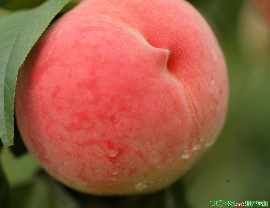 延庆国光苹果