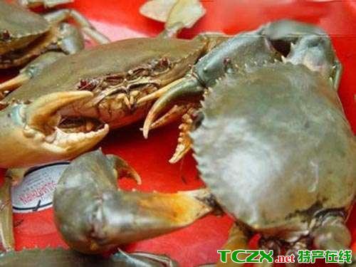葫芦岛海蟹