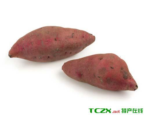 优质脱毒红芋