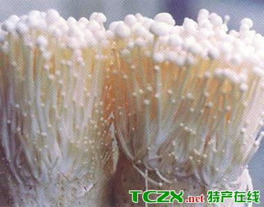 花官食用菌