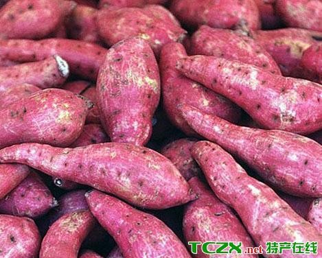 红薯甘薯地瓜