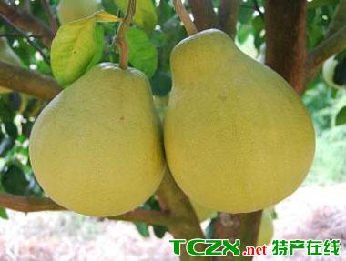 是全国最大的金柚