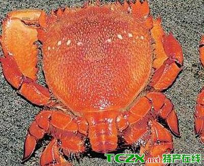 陵水琵琶蟹