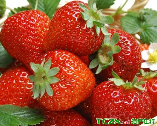 黑山谷草莓