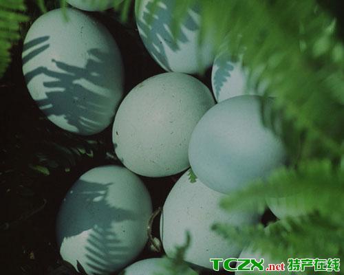 长顺绿壳鸡蛋