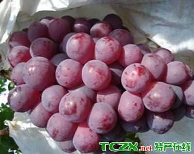 宾川红提葡萄