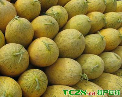 景泰沙漠蜜瓜