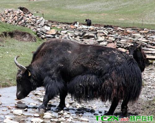 青海省海西州天峻县境内,主要包括新源镇,快尔玛乡,龙门乡,木里