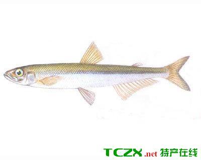 乌伦古湖池沼公鱼