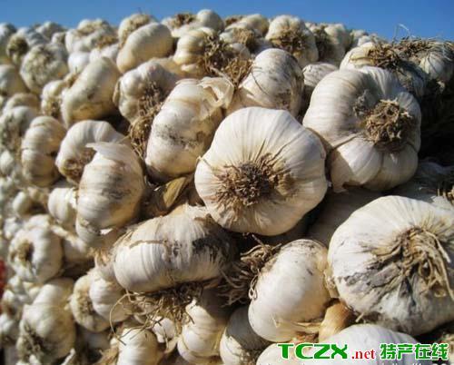 新疆白皮大蒜