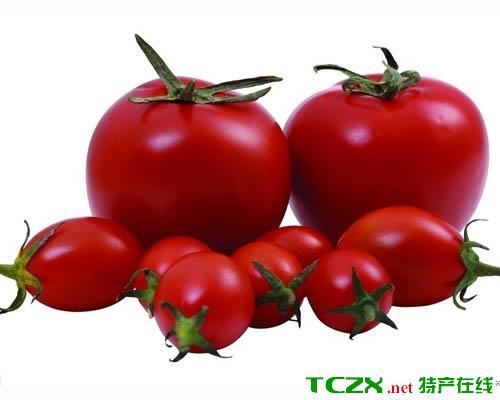 吉木萨尔番茄